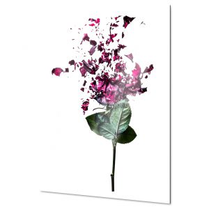 Rose Fine Art Print for home and workspace decorations